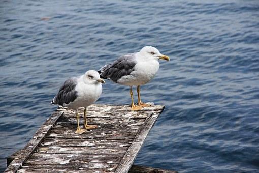 Image of seagulls