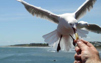 Sea Gull Deterrents Updated