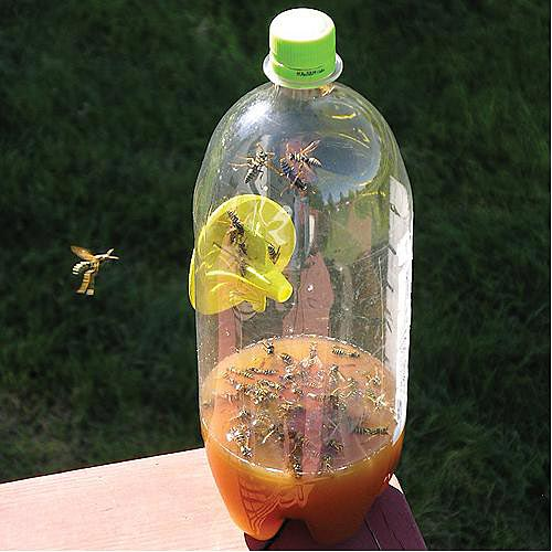 image of Homemade hornet trap