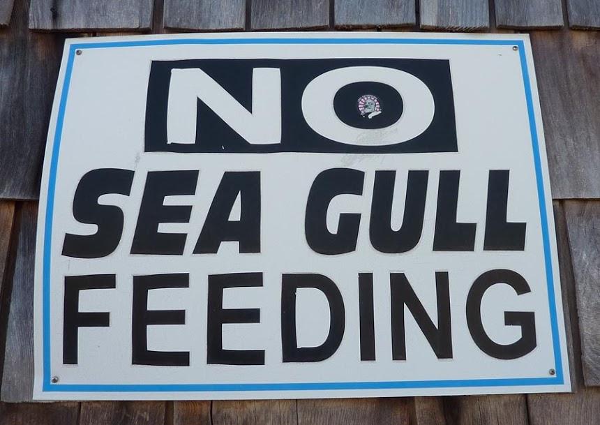 image of No feeding gulls