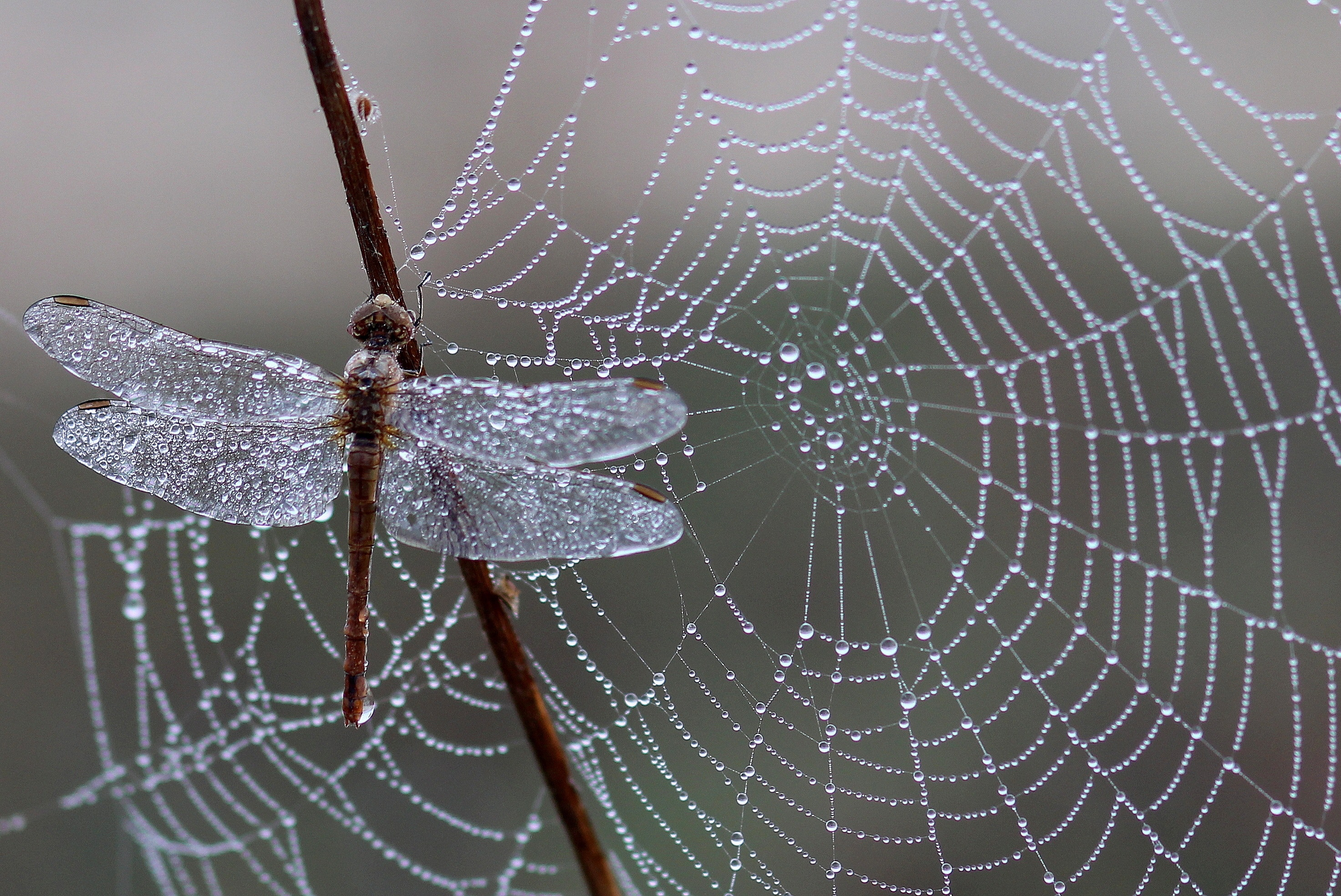 image of spider web